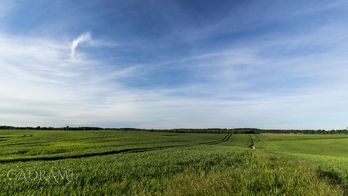 """""""Oprócz błękitnego nieba…"""" i zieleni, rzecz jasna"""